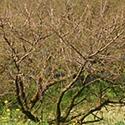 輪玉農園の風景1