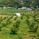 輪玉農園の風景3