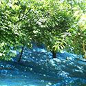 輪玉農園の風景5